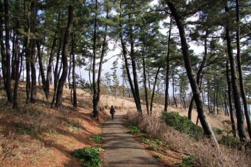 <p>A park teeming with beautiful pine trees borders the cliff</p>