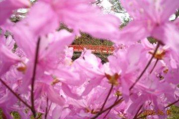 Red bridge Yuushien park Shimane