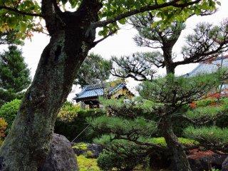 日本庭園の松越しに、道を挟んで建つ庫裡を眺める