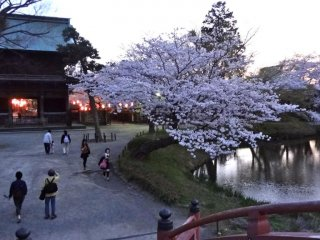 At night during cherry blossom season, the rear approach to the temple is lit up with lanterns.