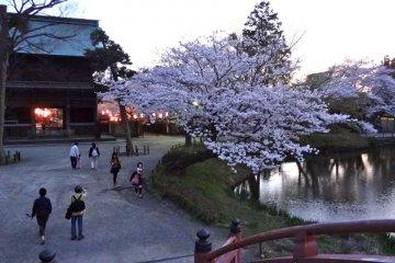 벚꽃이 피는 계절의 밤에는 뒷전에 등불이 켜진다