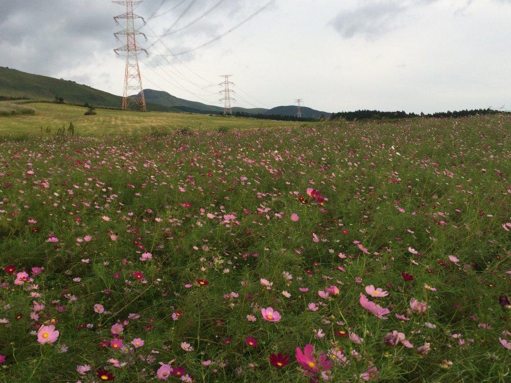 Thế giới đầy màu sắc phản chiếu trên núi Aso.