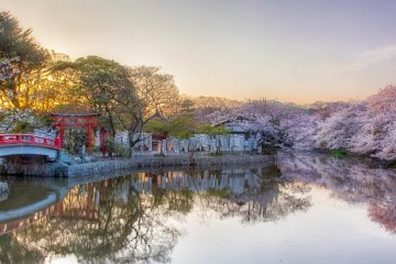 Near the entrance of Hachiman-gu Shrine are two ponds with the same name called Genpei-ike pond.