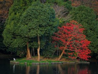This is Genpei-ike pond on the left side. Which one do you like best?