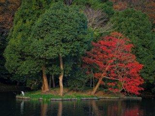 이것은 왼쪽에 있는 겐페이처럼 생긴 연못이다. 어느 게 가장 좋니?