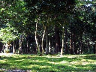 Taicho-ji Temple is in deep woods