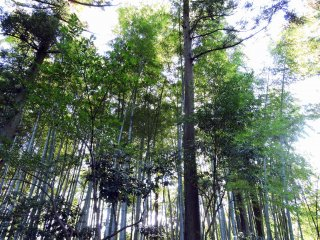 Taicho-ji Temple is in the woods full of tall trees