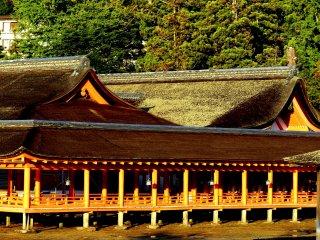 Mặt trời đang lặn biến màu đỏ của Itsukushima sang màu cam