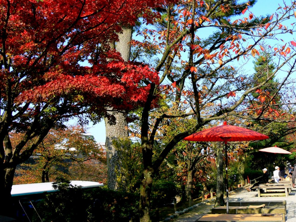 Red umbrella harmonizes with red maple leaves