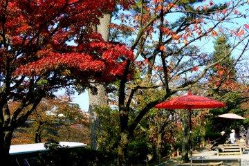 <p>Red umbrella harmonizes with red maple leaves</p>