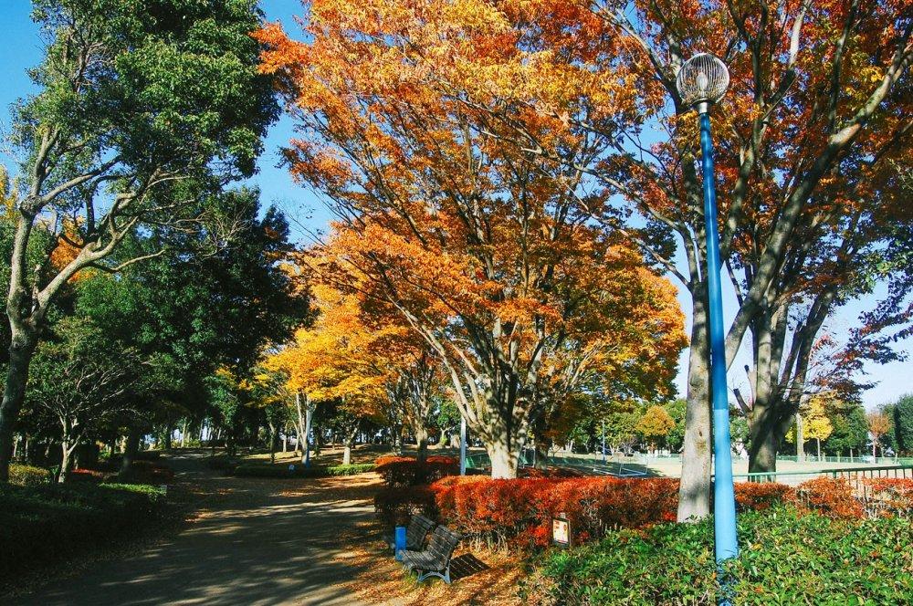 Nikmati pemandangan berwarna-warni dari taman sentral kota Hanyu