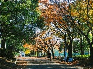 Taman sentral kota Hanyu ini merupakan tempat yang sempurna untuk jogging atau bersantai