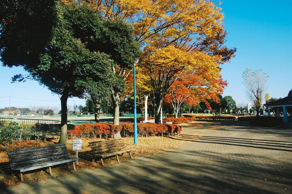 Bangku-bangku taman disediakan untuk beristirahat. Bisa digunakan untuk memandangi warna-warni musim gugur.