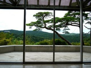A leaning pine is framed by the windows