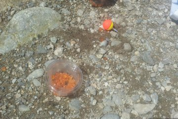 <p>Salmon roe or maggots to tempt the fish</p>