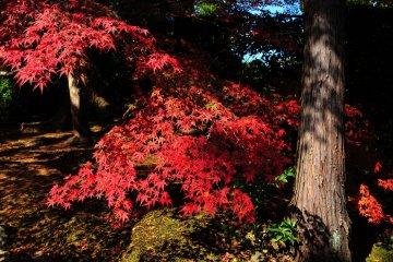 Autumn Foliage Path to Nison-in - 1