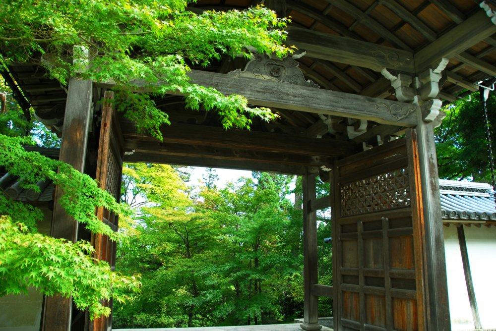勅使門からも翠が溢れる