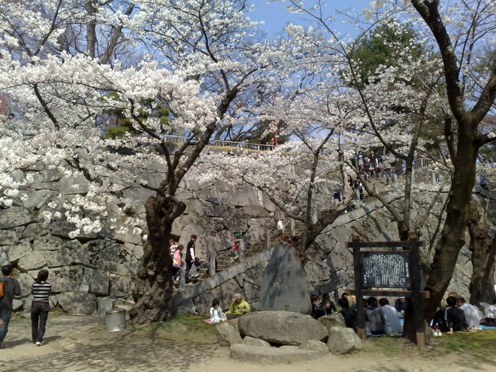 Iwate park in spring, it is full of cherry trees and in full bloom the park is incredibly beautiful.