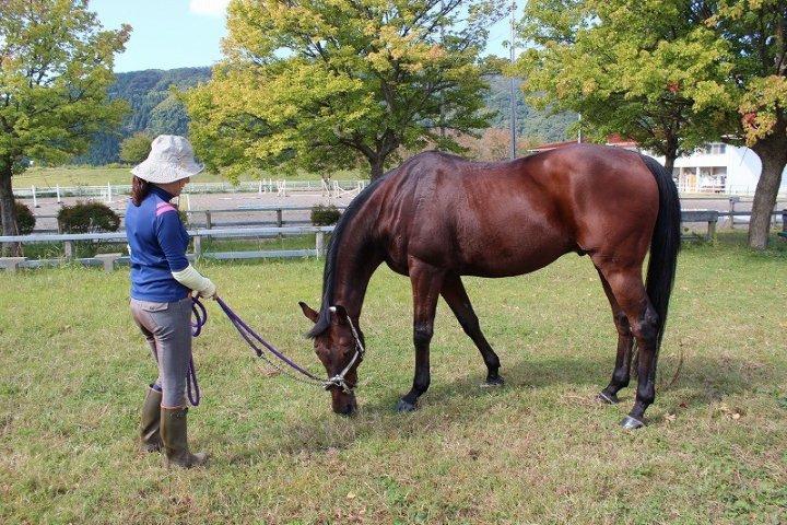 Cưỡi ngựa tại Trại Ngựa Fukui