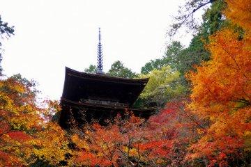 Pagoda and Main Hall at Kongorinji