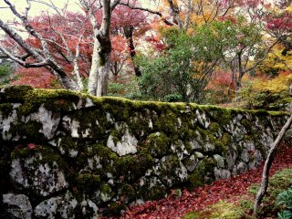 A border of red maple leaves runs along the foot of the wall