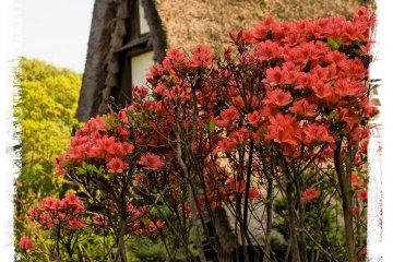 <p>Вы найдете множество сезонных цветов.</p>