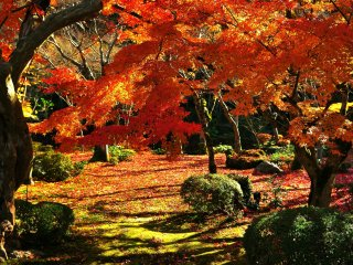 十牛の庭(じゅうぎゅうのにわ)、池泉回遊式庭園