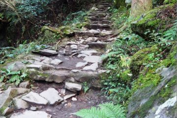 <p>The path to the waterfall has one small incline, near the trailhead</p>