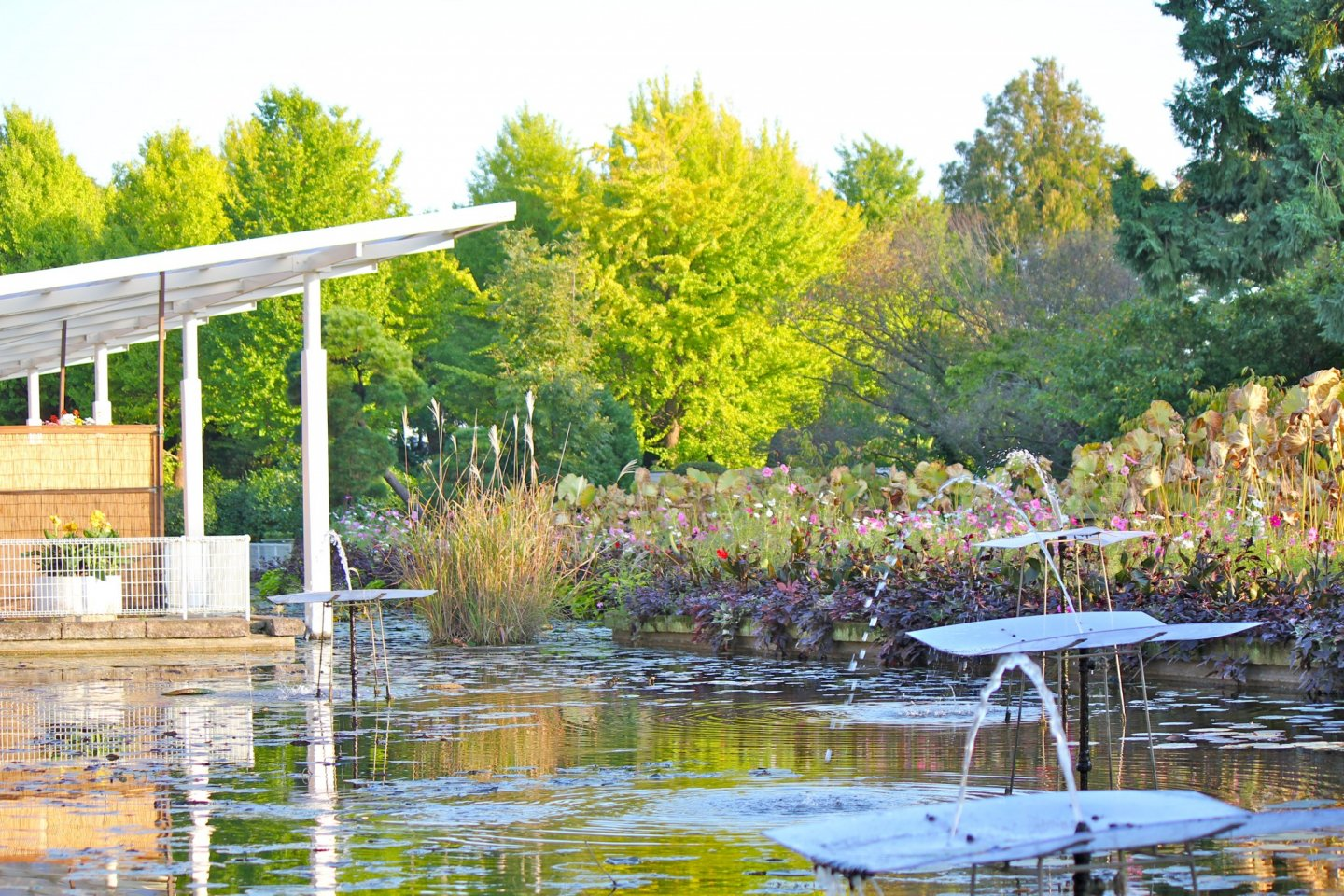 The tranquil lily pond is just steps away from the main entrance
