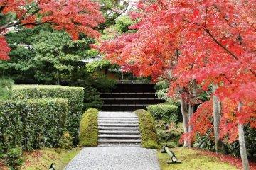 Fall Foliage at Katsura Rikyu