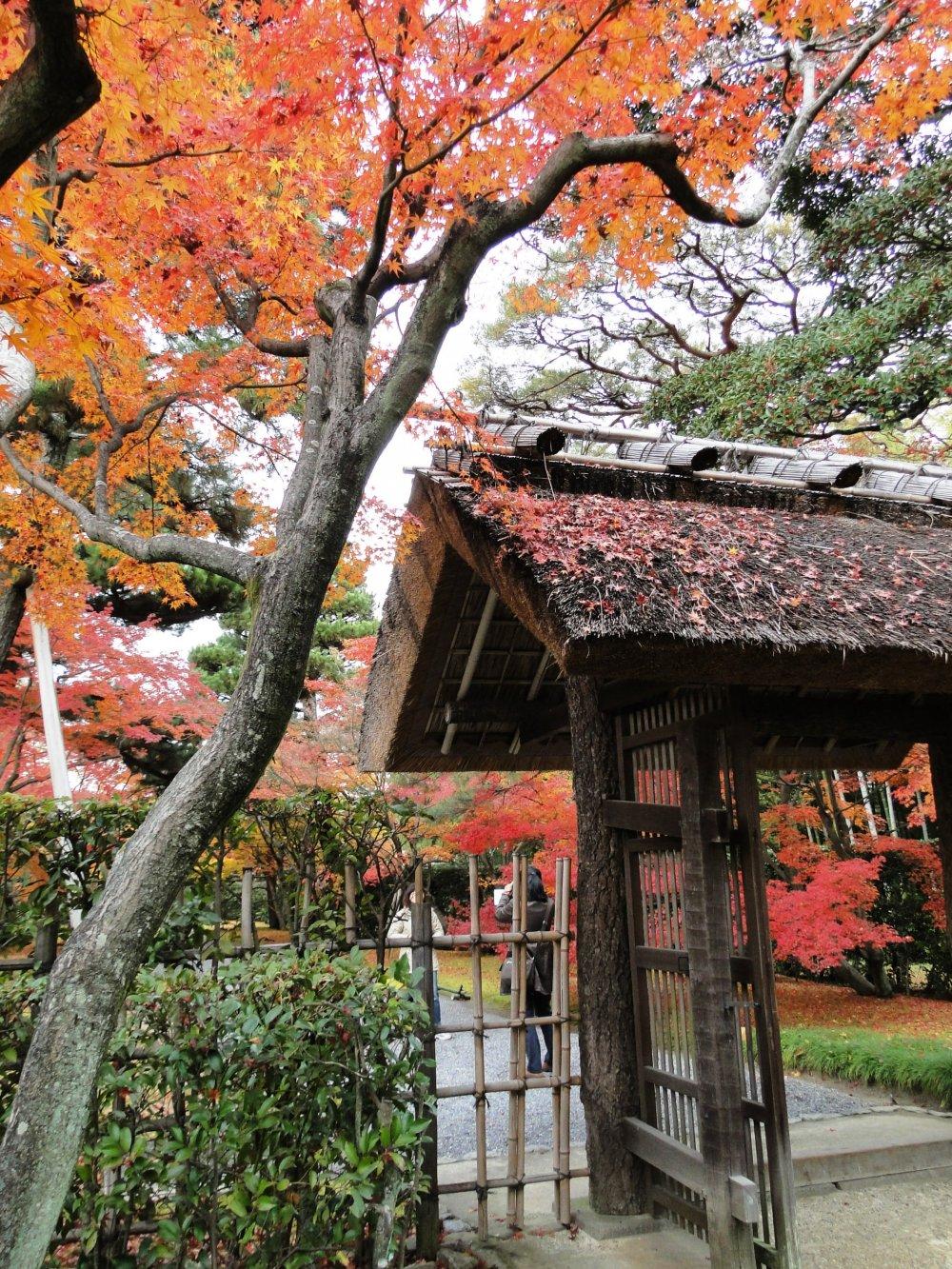 16294 on Katsura Imperial Villa Gate