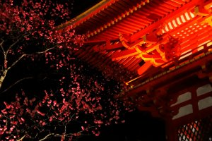 It is still chilly at night in Kyoto around the time when plum blossoms start to bloom