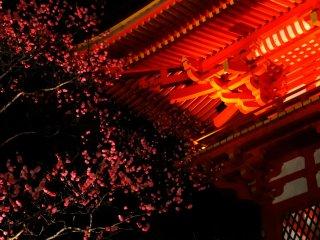 ちょうど梅の花がほころぶ頃の京都 まだまだ夜は冷え込む