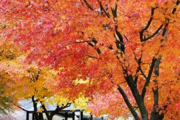 <p>길 가에 있는 큰 단풍나무에서 피크닉을 해보세요.</p>