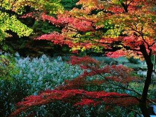 Rumbaian alang-alang berwarna keperak-perakan di bawah cahaya matahari yang sedang terbenam