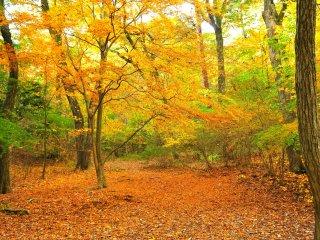 Hembusan angin musim gugur menggerakkan daun-daun yang berwarna kuning