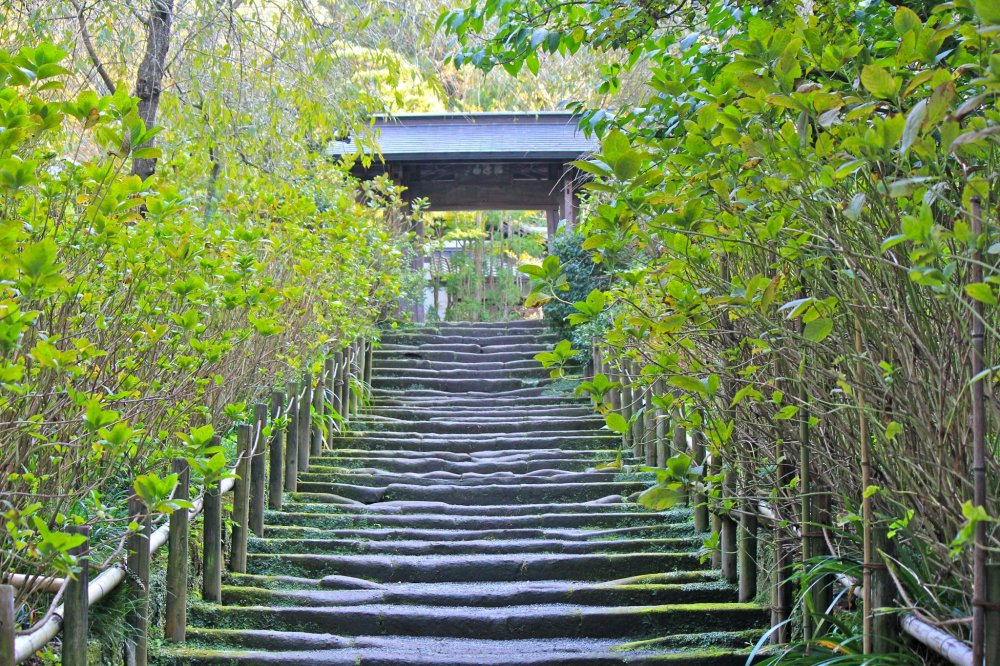 The path of weathered Kamakura stones. In June, the bushes along the path bloom with beautiful hydrangeas and is a very popular spot for photo taking.