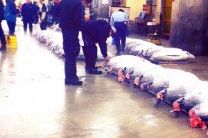 Algumas pessoas vêem os atuns leiloados