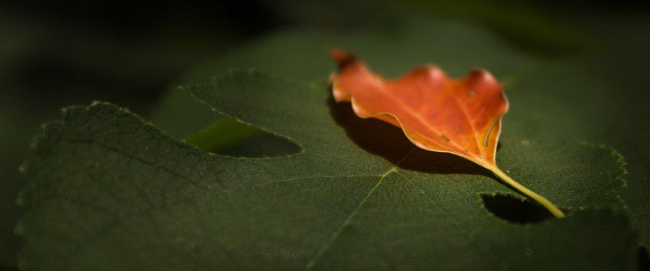 初秋の兆し