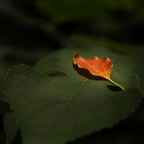 Koishikawa Botanical Garden Escape