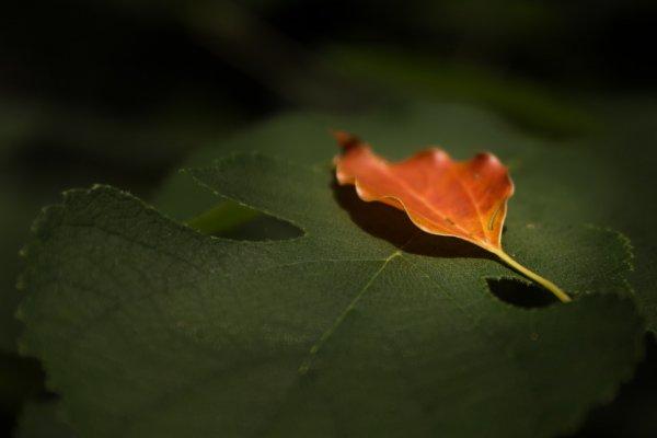 La toute première apparition de l'automne