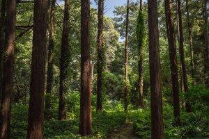 爽やかな森の小道