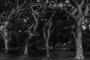 Eerily beautiful white trees