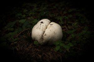 Un champignon étrange