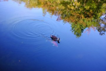 <p>The cute animals of Sanshinomori Park</p>