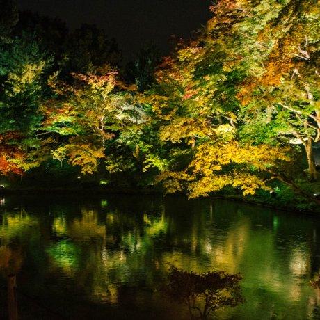 Ánh sáng mùa thu ở đền Kodai-ji