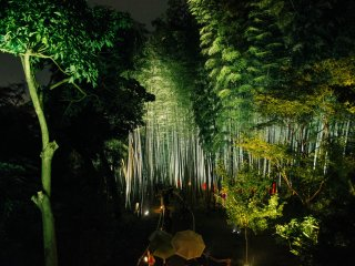 View from afar of the bamboo forest.