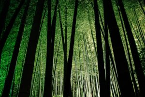 Another angle of the bamboo forest.