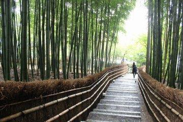 Kyoto Adashino Nenbutsu-ji 2 of 4
