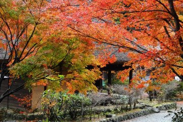 Autumn at Heike no Sato